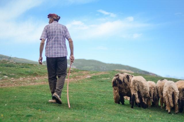 A Shepherd Traveler - Short Inspirational Stories