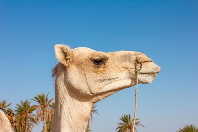 Zoo Camel - Short Inspirational Stories